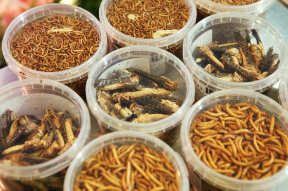 Insects: three beneficial components of animal feed